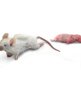 ratoncongelado